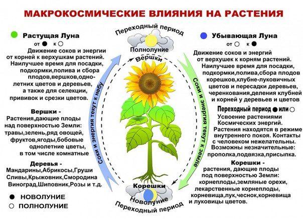 лунный календарь огородника на февраль 2019 года