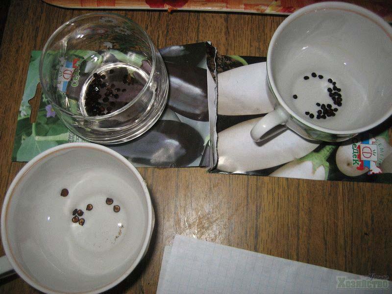 как садить капусту семенами в грунт