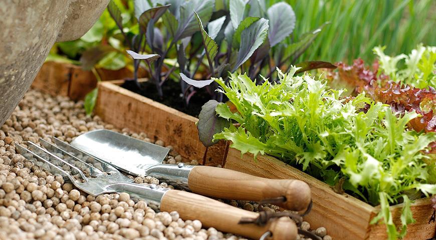 как вырастить рассаду брокколи